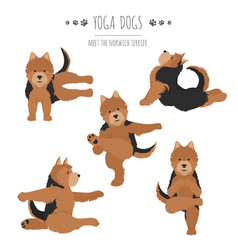 Yoga dogs poses and exercises norwich terrier vector
