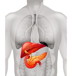 Pancreas cancer in human vector image vector image