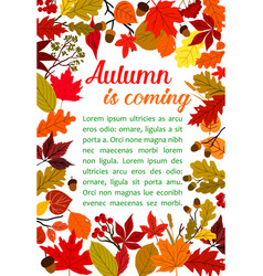 Autumn fallen leaf poster with fall nature frame vector