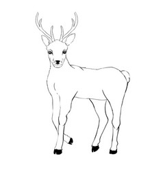 Deer drawing vector