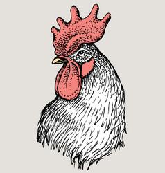 Head rooster vector