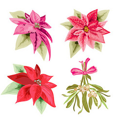 poinsettias and mistletoe set vector image