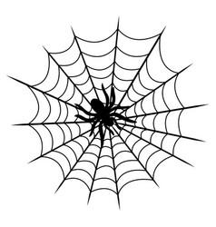 Tarantula on cobweb isolated vector