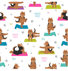 yoga dogs poses and exercises norwich terrier vector image