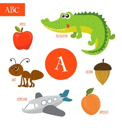 Letter A Cartoon alphabet for children Alligator vector image