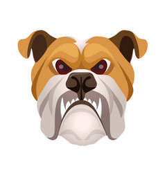 angry bulldog face colored in beige and white vector image