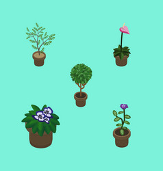 Isometric plant set of fern flower grower and vector