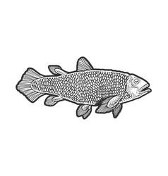 Latimeria fish sketch vector