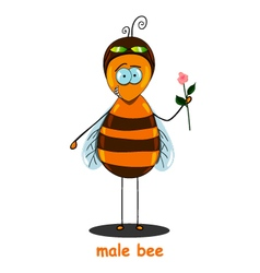 male bee vector image
