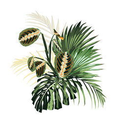 palm leaves jungle leaf and exotic plants vector image
