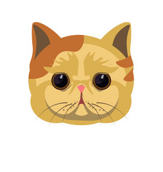 exotic shorthair kitten in beige color with spots vector image vector image