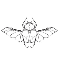Hand drawn flies insect vector image vector image