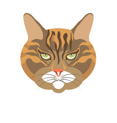 Abyssinian old cat colorful portrait isolated vector