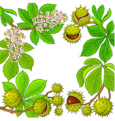 chestnut branches frame on white background vector image