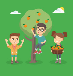 Children harvesting oranges in the orchard vector