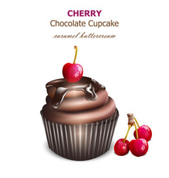 chocolate cupcake with cherry fruit retro vector image