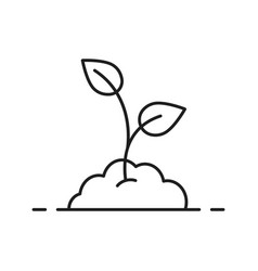 Growing sprout linear icon vector