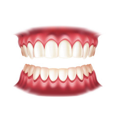 realistic dentures human mouth with teeth vector image
