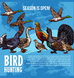 wild birds hunting sport sketch vector image