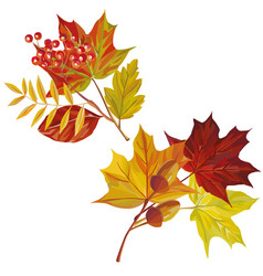 autumn leaves composition white background vector image