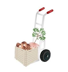 Hand Truck Loading Fresh Taro in Shipping Box vector image