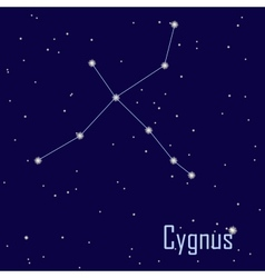 The constellation Cygnus star in the night sky vector image vector image