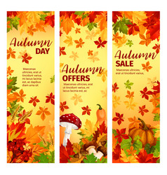 Autumn sale banner set of fall leaf and pumpkin vector