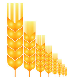 Field ripe wheat vector