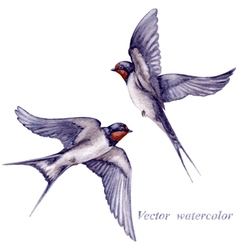 Swallows watercolor vector image vector image