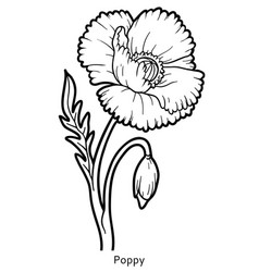 Coloring book flower poppy vector