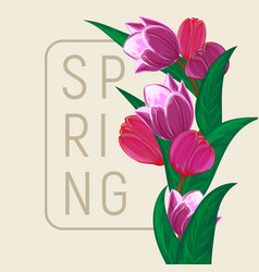 tulips flower bouquet square frame or spring vector image
