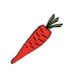 carrot vegetable natural vector image vector image