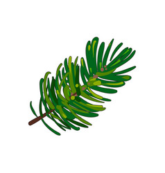 hand drawn fir tree twig branch spruce vector image