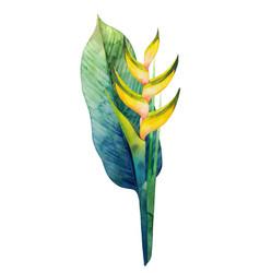 watercolor heliconia bouquet vector image vector image