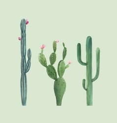 Beautiful three watercolor cactus hand vector