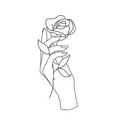 beautiful woman hand holding flower rose vector image