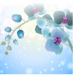 Blue Orchid Flower on a Blurred Background vector