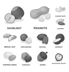 Different kinds of nuts monochrome icons in set vector
