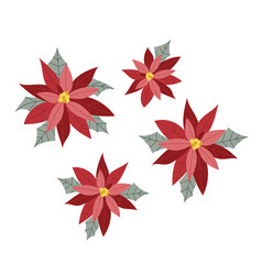 poinsettia flowers isolated for christmas or new vector image