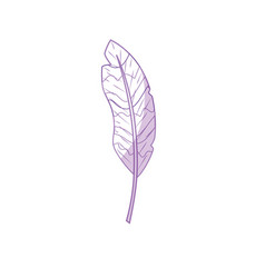Silhouette beauty feather style with decoration vector