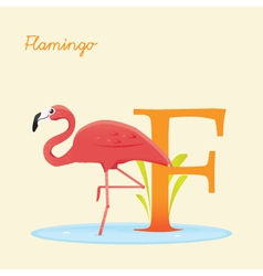 F for flamingo vector image vector image