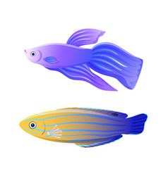 Betta fish and blue striped tamarin wrasse poster vector