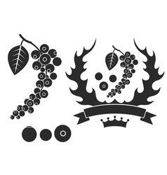 Black pepper vector
