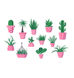 set domestic green plants vector image