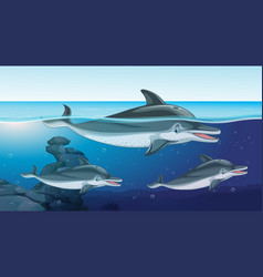 Three dolphins swimming in ocean vector
