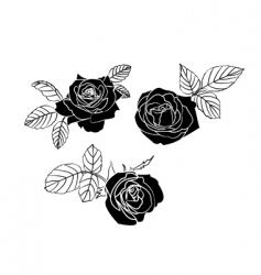 black roses vector image vector image
