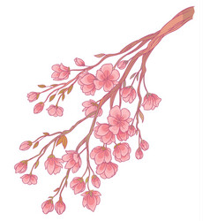 branch of cherry blossoms with flowers vector image vector image