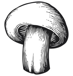 champignon mushroom vintage engraved vector image vector image