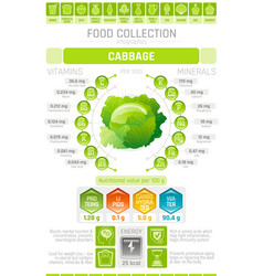 food infographics poster cabbage vegetable vector image vector image