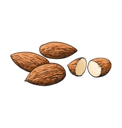 Whole and cut almond nuts isolated on white vector image vector image